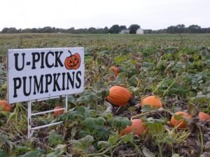 Best pumpkin patches near portland.